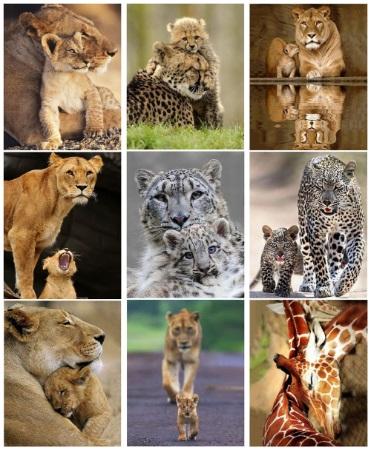 алмазная мозаика с животными - тигры, львы